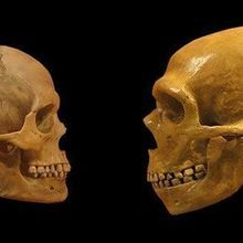 Evolution May Have Deleted Neanderthal DNA