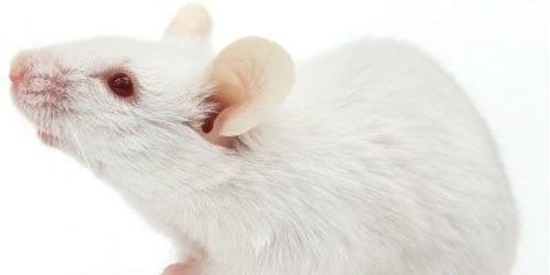 Neuron Populations Involved in Mouse Olfaction Change Over Time