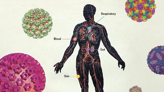 The Human Virome The Scientist Magazine