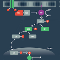 Exploring Uncharted Interactions from Cell Signaling Pathway Analysis