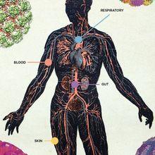 The Human Virome