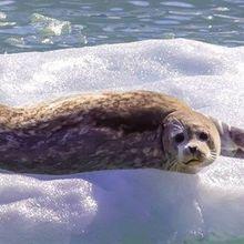 World Leaders Create Antarctic Marine Reserve