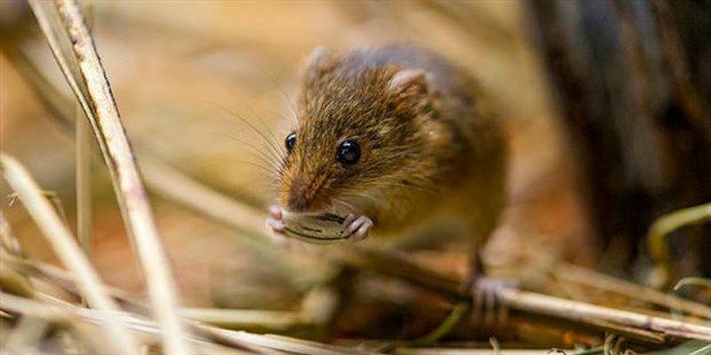 Mice Display Human-Like Sense of Body Awareness