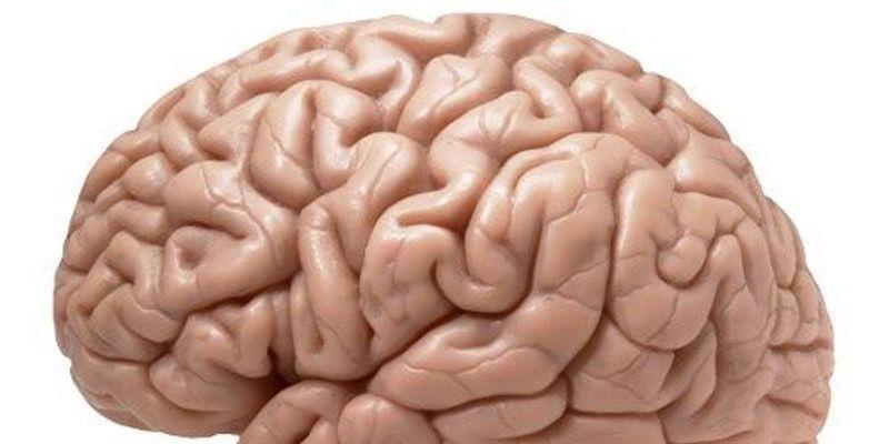 Nascent Neurons Journey Through Newborn Brain