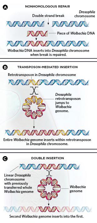 mechanisms of lateral gene transfer
