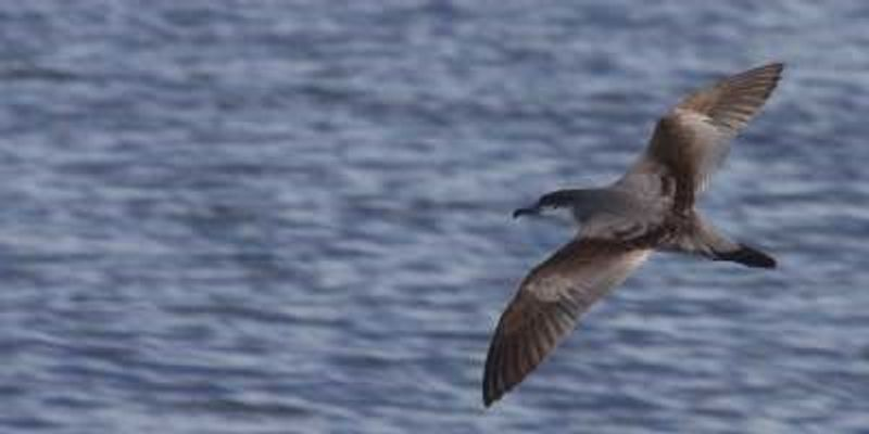 Birders Break North American Record