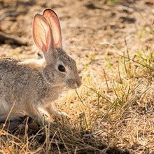 Image of the Day: Cottontail Cool