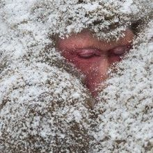 Image of the Day: Staying Warm