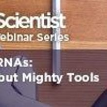 microRNAs: Small but Mighty Tools
