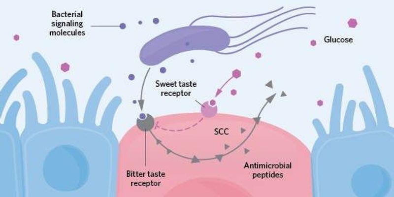 Odor, Taste, and Light Receptors in Unusual Locations