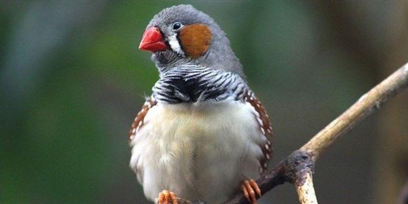 Birds Warn Unborn Chicks About Warmer Weather