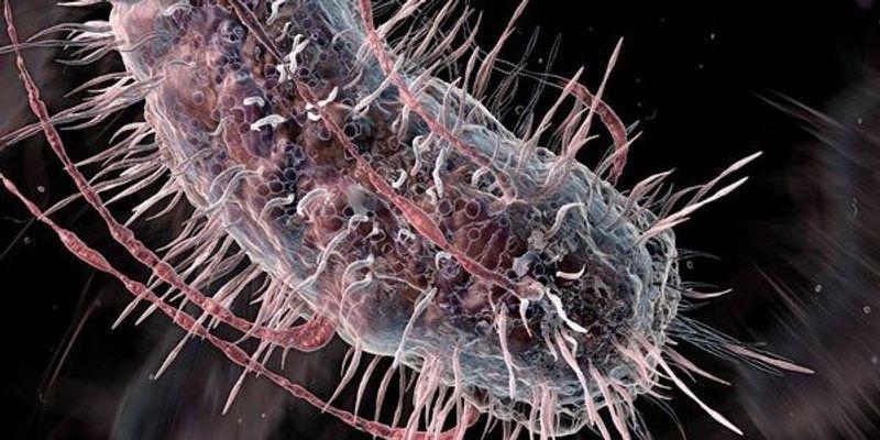 Streamlining the <em>E. coli</em> Genetic Code