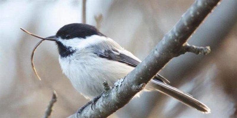 Virus Linked to Birds' Deformed Beaks