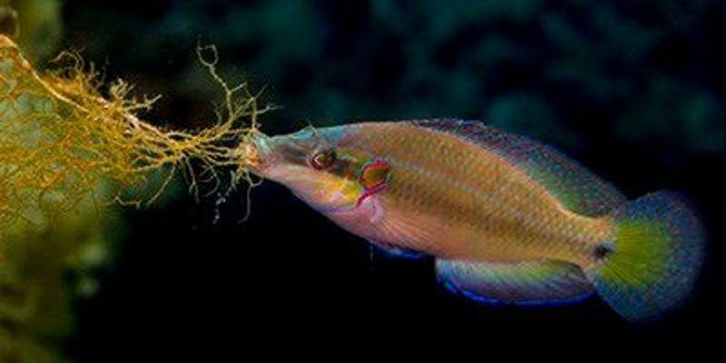 Female Fish Select Mates' Sperm