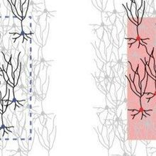 Stimulating Novel Neural Circuits in the Mouse Brain