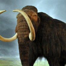 Study: Last Woolly Mammoths Died of Thirst