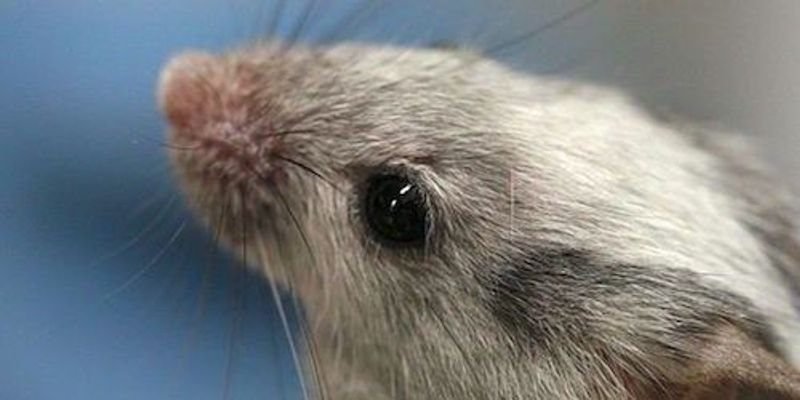 Neurons Compete to Form Memories