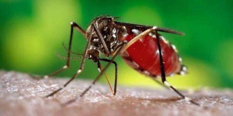 Zika Update