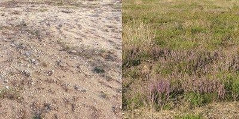 Donor-Soil Microbes Drive Ecosystem Restoration