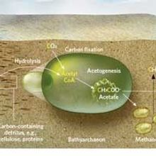 Archaea's Role in Carbon Cycle