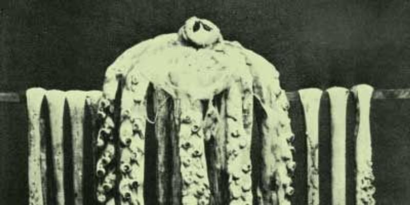 First Photo of Intact Giant Squid, 1874