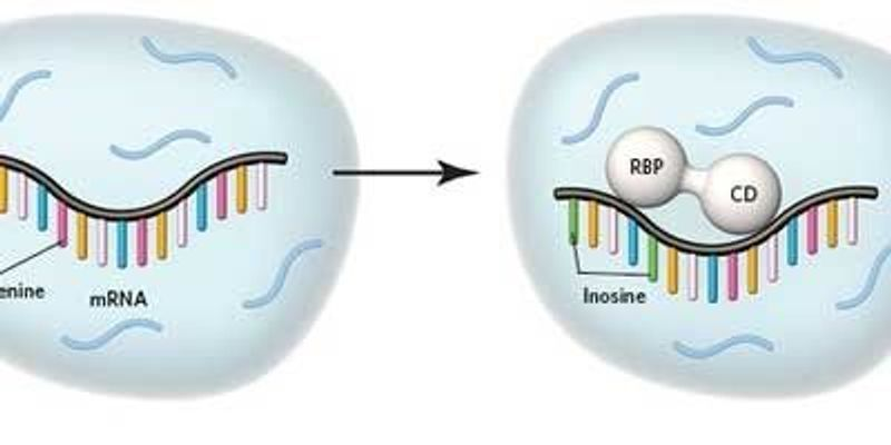 A New Way to ID Targets of RNA-Binding Proteins