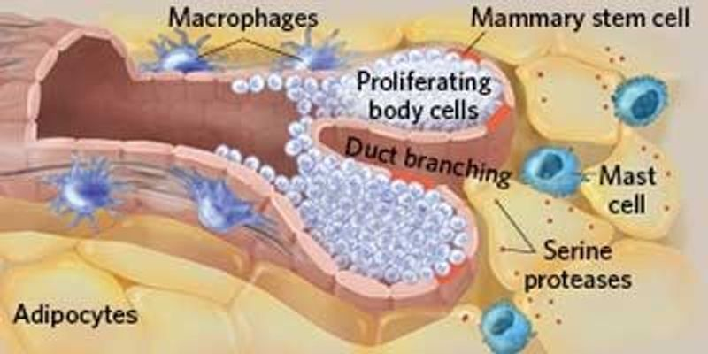 Immune Cells' Roles in Tissue Maintenance and Repair