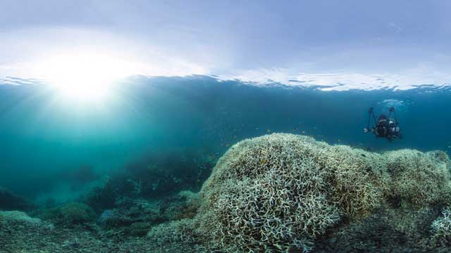 Changing Oceans Breed Disease | The Scientist Magazine®