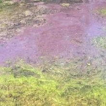 CDC to Track Algal Blooms
