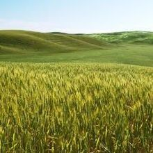 Study: Farming Arose Twice in the Ancient Middle East