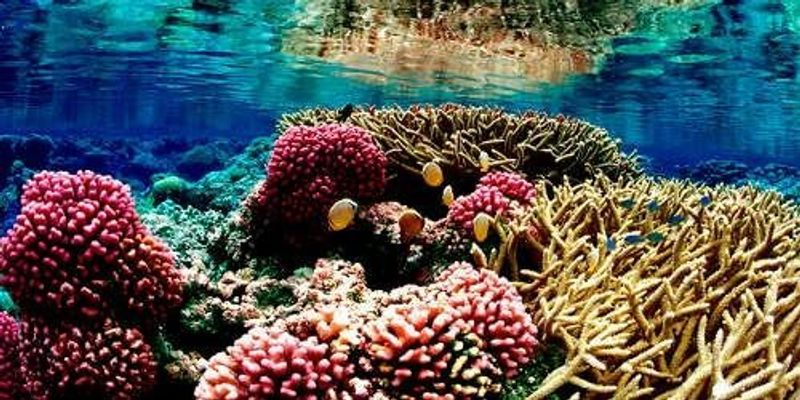 Identifying Resilient Reefs