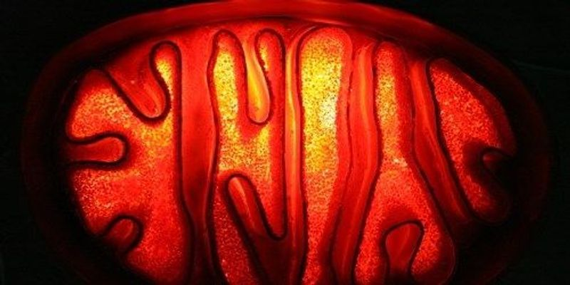 Improving Mitochondrial Replacement Therapy