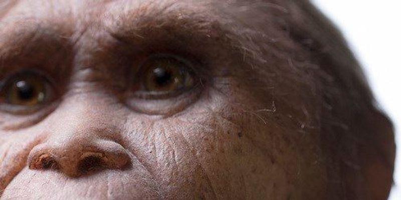 "Oldest-Known ""Hobbit""-like Fossils Found"