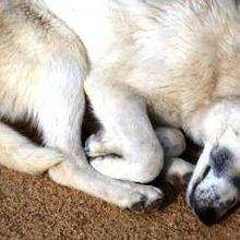 Origin of Domestic Dogs | The Scientist Magazine®