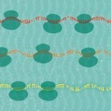 Finding Mislabeled Noncoding RNAs