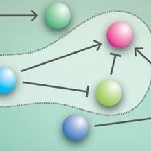 Building Gene Networks