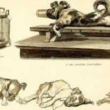 The Rabies Vaccine Backstory