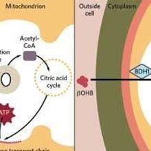 In Failing Hearts, Cardiomyocytes Alter Metabolism