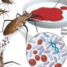 Gut Bacteria for Insect RNAi