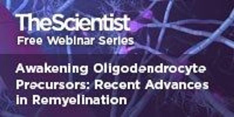 Awakening Oligodendrocyte Precursors: Recent Advances in Remyelination