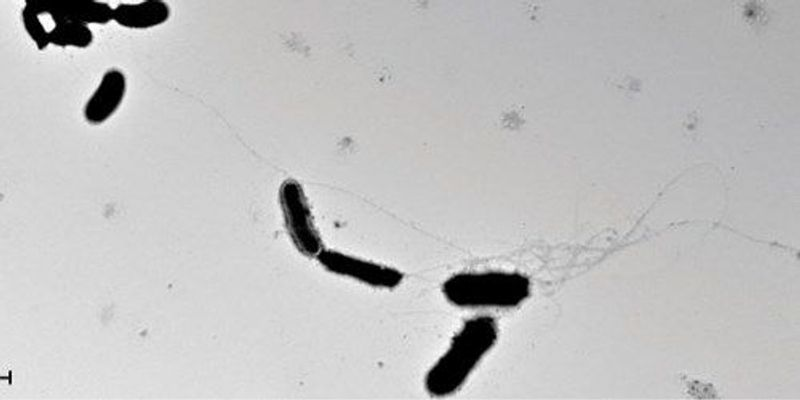 Amyloid Thwarts Microbial Invaders