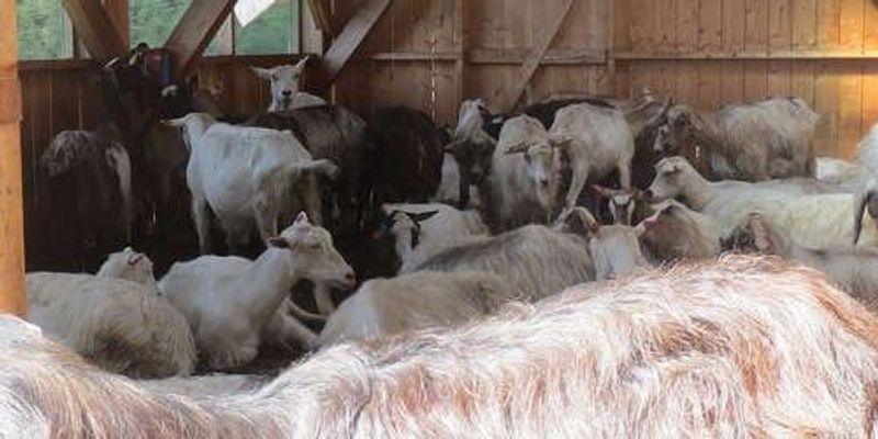 Antibody Maker Loses License Over Animal Welfare Violations