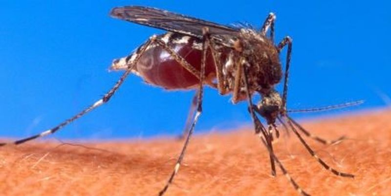 House Passes Watered-Down Zika Aid Bill
