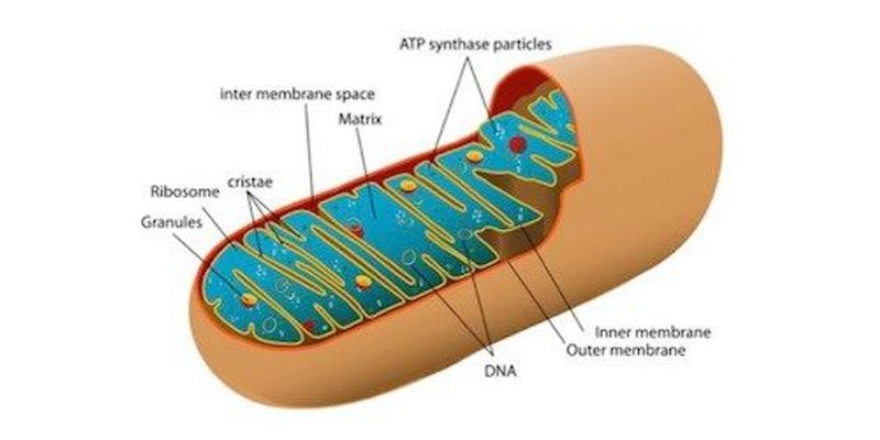 Bill Banning Mitochondrial Replacement Therapy Considered