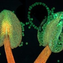 Image of the Day: Pollen Pouches