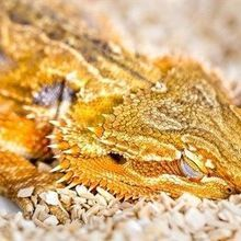 Image of the Day: Drowsy Dragon