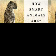 Book Excerpt from <em>Are We Smart Enough to Know How Smart Animals Are?</em>