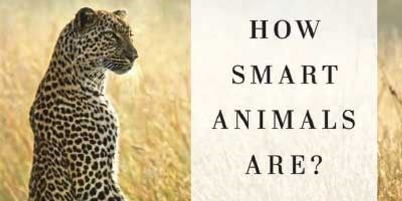 To Each Animal Its Own Cognition