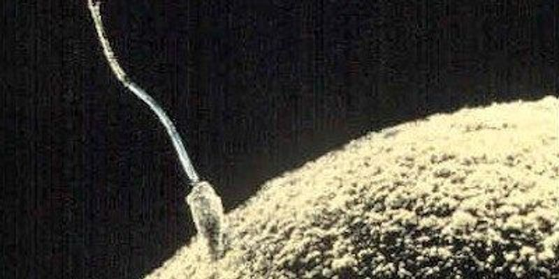 Skin Cells Turned Into Immature Sperm