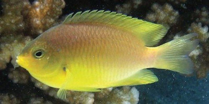 Study: Small Fish Comforted By Big Predators